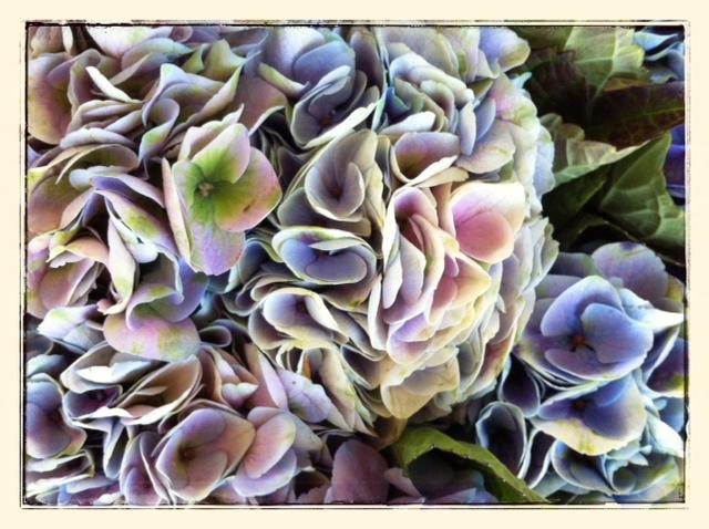 bodegon de hortensias 1