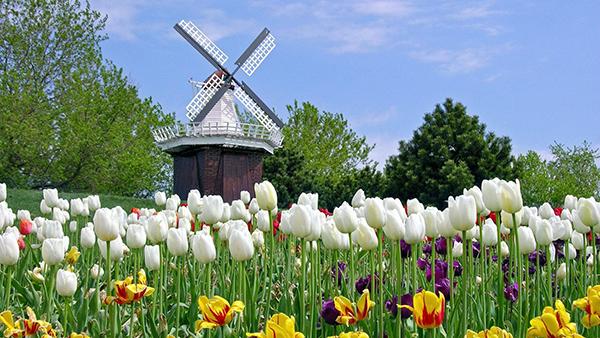 Olanda-Tulip-0149-1080x1920