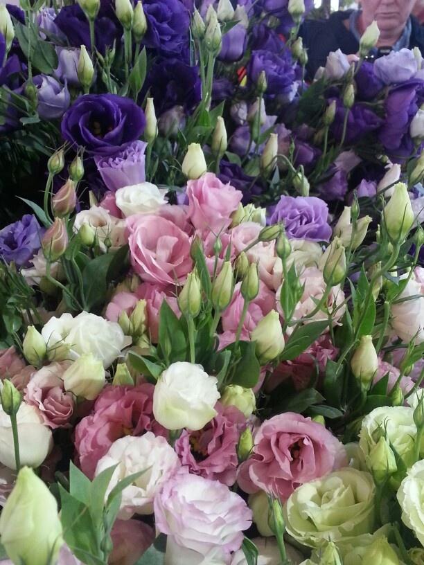 Ramo multicolor de Lisianthus, tonos rosa, blanco azul y lila. Imagen de  Kerry Murrell