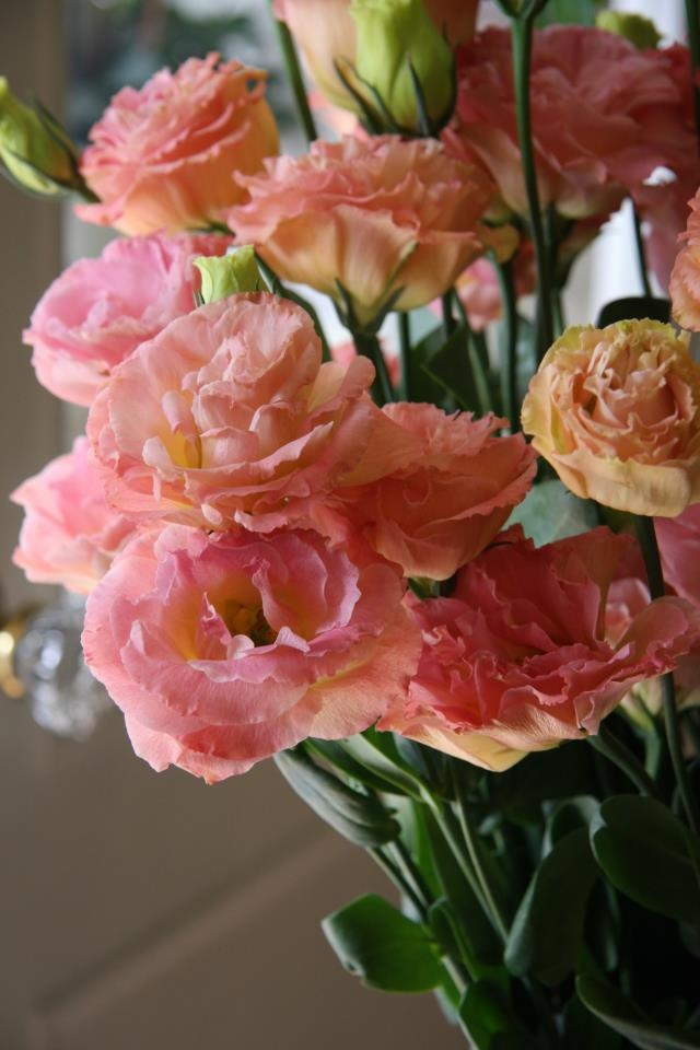 Ramo de Lisianthus  rosas. jpg - Pinterest