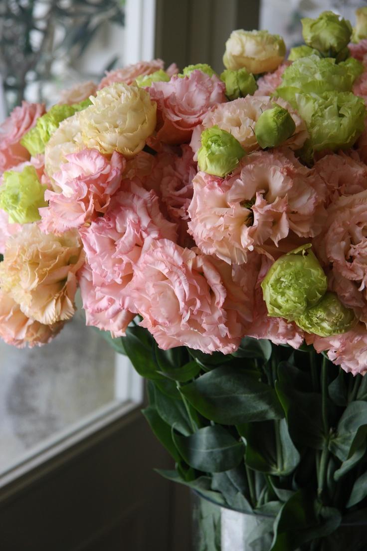 amo de Lisianthus  rosas. jpg - por Kendra Cox Pinterest