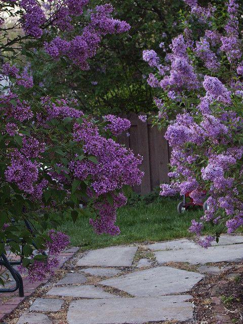 jardín de con lilos