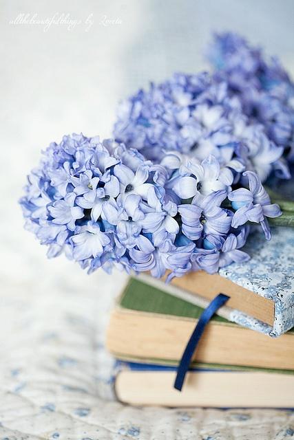 Lilas  azules y libros. Pinterest
