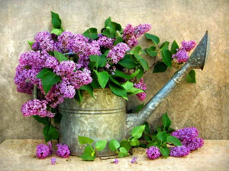 regadera con lilas .By. magyarvagyok.com - Pinterest