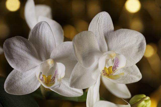 consejos para florecer orquídea